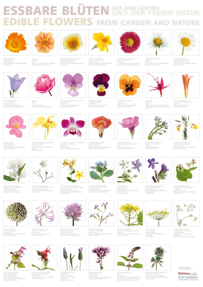 Essbare Blüten Bilder
