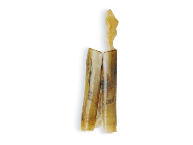 Bambusmuschel oder japanische Scheidenmuschel, lat. Stolen strictus