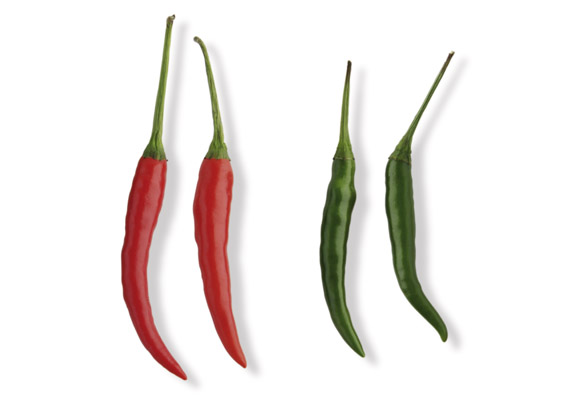 Chili (lat. Capsicum frutescens)
