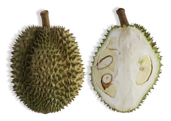 Durian (lat. Durio zibethinus)