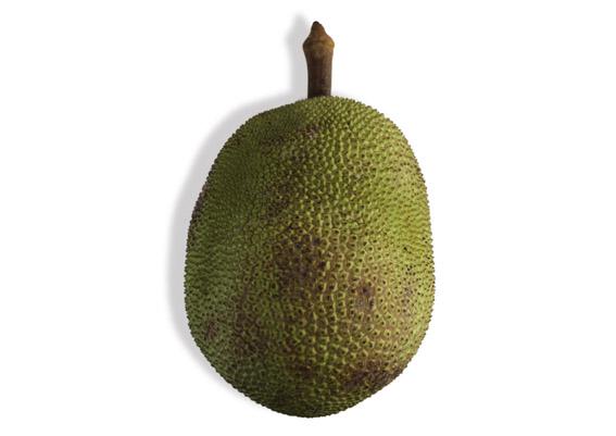 Jack Fruit (lat. Artocarpus heterophyllus)