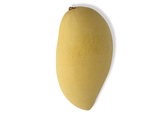 Manila Mango (lat. Mangifera indica)