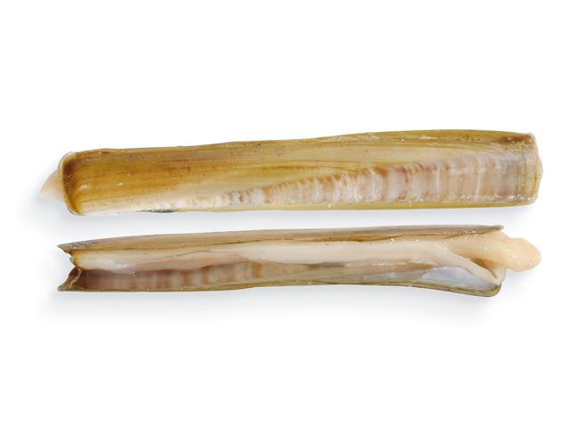 Messerscheide, lat. Ensis siliqua