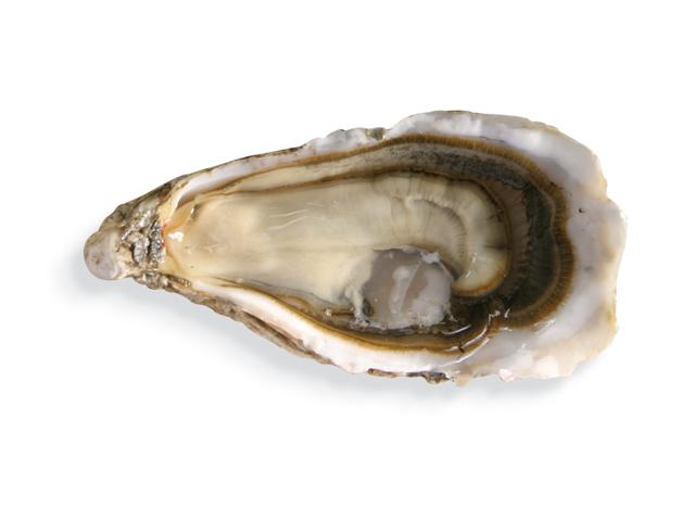 Pazifische Auster, lat. Crassostrea gigas