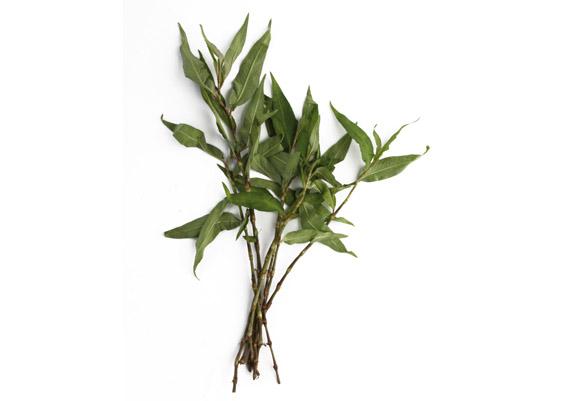 Praew Blätter (lat. Persicaria odorata)