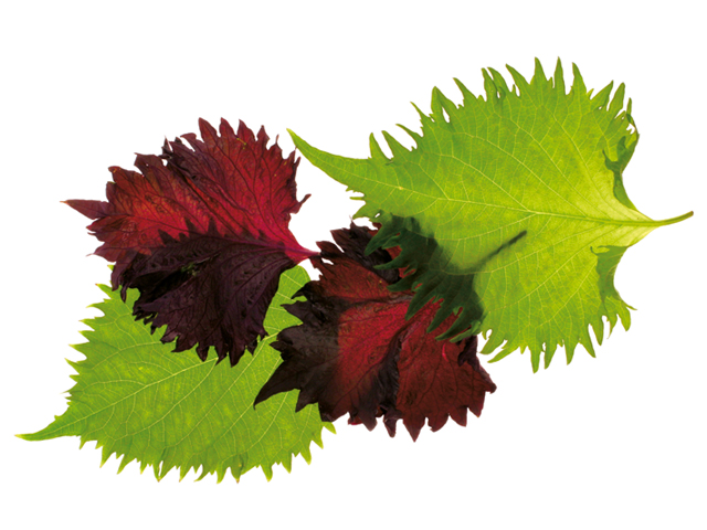 Shiso® Leaves Green & Purple