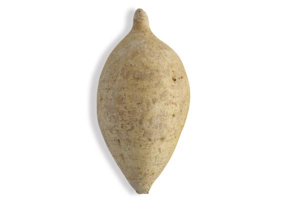 Yamwurzel (lat. Dioscorea)
