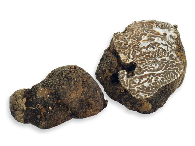 Muskat- oder Wintertrüffel, lat. Tuber brumale