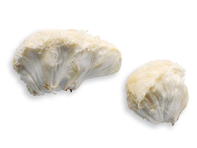 Pom-Pom-Blanc, lat. Hericium crinaceus