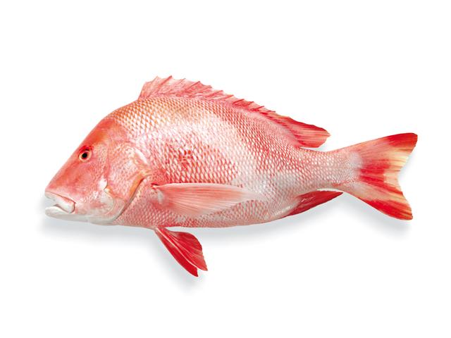 Red Snapper, roter Schnapper, lat. Lutjanus malabaricus