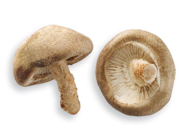 Shiitake-Pilze, lat. Lentinus edodes
